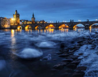 Swans Creating Clouds at Charles Bridge , Prague, Czech Republic