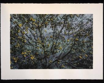 Kalga Apples Silkscreen art print