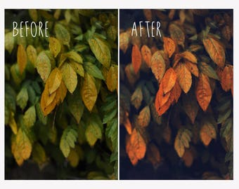 Dark & Vibrant Autumn Photoshop Action - Professional Photo Editing for Landscapes and Nature Photography