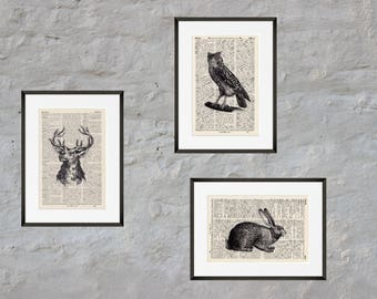 Prints set of 3 - forest animals - Antiquarian Book page