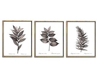 Sepia Botanical Print Set of 3, Wall Art Printable, Printable Art, Rustic, Botanical Illustrations, Wall Art Set, Art Print Sets, Decor