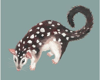 Australian Art Print Quoll/ illustrated / animal / wildlife / painting /