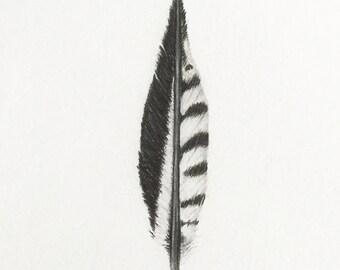 Original red-bellied woodpecker feather colored pencil art bird birds 3x5