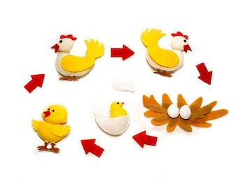Life Cycle of the Chicken Science Felt Set/Science Activity Board/Sensory Tool/Eco-Friendly/Ready to Ship
