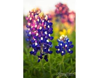 "Texas Home Decor Print | ""Bluebonnet Sunset Detail"" | Texas Wildflowers Photo Print - Texas Bluebonnets Wall Art| 12x16 Photo - 11x14 Photo"
