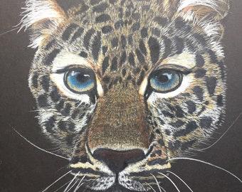 Amur Leopard, Big Cat