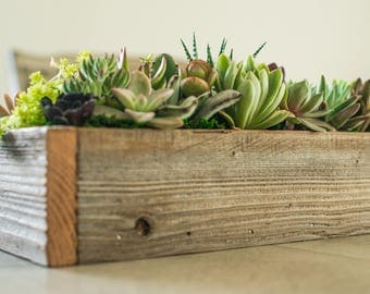 Succulents in wooden box succulent t box succulent centerpiece for table Christmas t office t sympathy