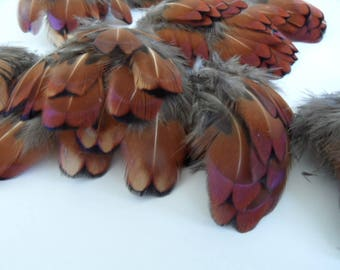 iridescent feathers pheasant Colchis, natural (les6)