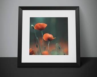 Poppy Digital Photo - Poppy Photo Print - Poppy Photo - Red Poppy Photo - Red Flowers - Digital Photo - Instant Download