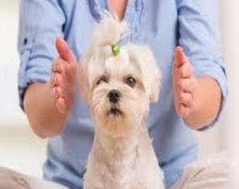 Pet Reiki Animal/ Pet Healing Taster session with Digital Email summary of Chakras and findings by Reiki Master