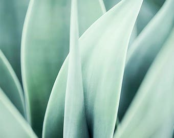 Succulent Print, Agave plant ,Succulent Decor, succulent photograph , Aqua Blue Wall Art Mint , Botanical Photography ,Garden Plant Art