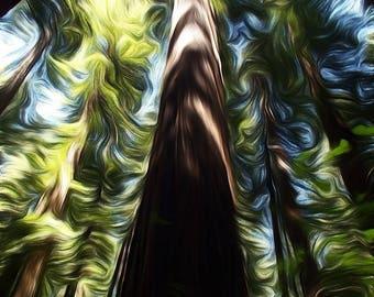 Digitally Enhanced 8x10 Photo Print - Redwood Trees