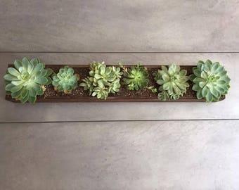 Succulent Table Rectangular Planter Centerpiece