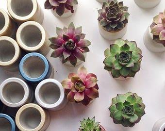 Mini Succulents, Cement Planter, Succulent Favors, Succulent Planter, Succulent Plants, Mini Planter, Succulents, Concrete Planter, Modern