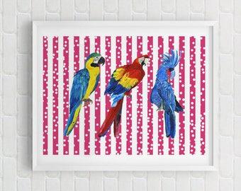Stripes Parrots