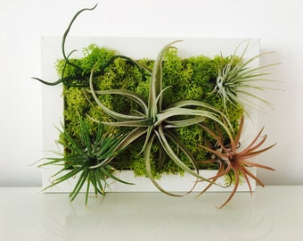 Plant frame - plant table - air plant - terrarium