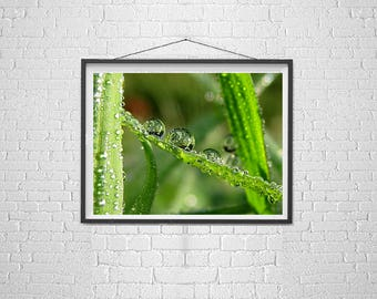nature photo marco,  small worlds photo, water drop photo, playful art, macro  drop photography, the poetry of nature, soothing office art