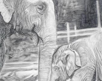 "Print of Elephants 8""x10"" Pencil Drawing"