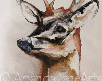 Stag's Head, deer,painting, picture, watercolour, art, animal, nature, gift