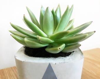 Concrete Plant Pot