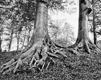 Digital File, Instant Download, Landscape photography, Photography, trees, Nature photography, Wall Art, Tree Art, Black and White