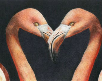 Flamingo heart - realistic animal portrait made by MagLM using colored pencils