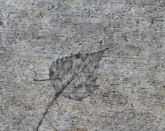 Leaf Imprint in Concrete, phpto, digital download