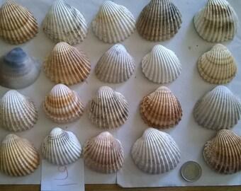 9 c) ocean shells, grass, clam shell