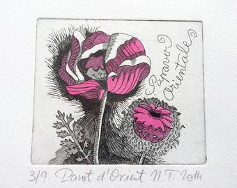 Oriental poppy, etching engraving / etching on copper