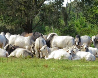 "Brahmans  ""The Meeting"", Canvas"