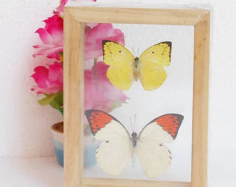 Real Mixed Couple Butterflies Taxidermy Double Glass Frame For Glft Collectibles