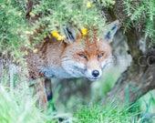 Fox Peering