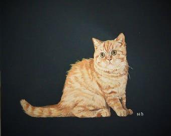 little ginger cat on black animal portrait