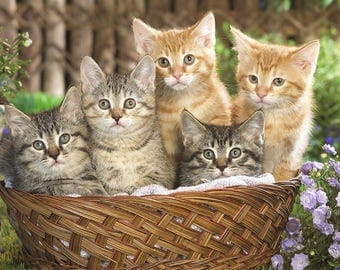 SET of TABLE semi-rigid ORIGINAL AESTHETIC WASHABLE and durable - Basket of kittens.