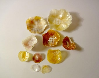 Set of 10 yellow mother of Pearl shells - San - home decor, creations