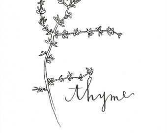 Thyme Ink Illustration