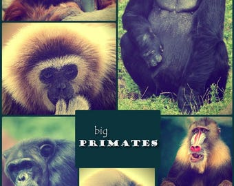 Photo collage, Poster Print, Printing on Matte Paper, Art print, Big primates, Wall Art, Home decor, Office decor, Gift