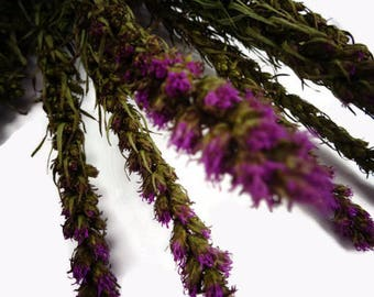 Dried Liatris, blazing star, dried flowers, dried flower bunches, purple flowers, floral supplies, floral crafts, Liatris, DIY wedding