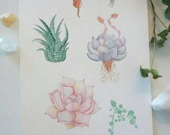 Vintage botanical watercolor