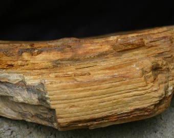 Rough Petrified Wood, Raw Petrified Wood, Fossil, Petrified wood