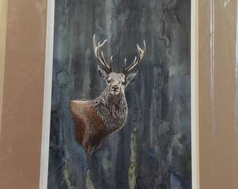 Signed Limited Edition Mounted Print- Stag