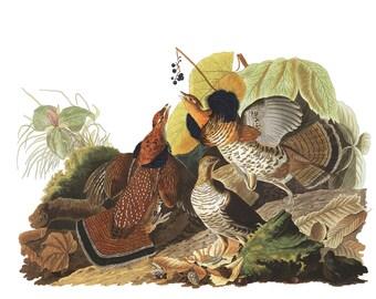 Audubon's Plate 41 Ruffed Grouse Cross Stitch Pattern