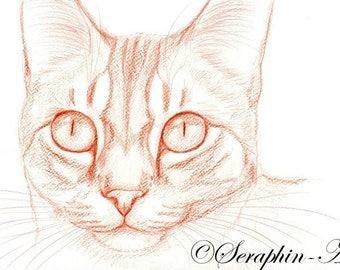Tabby Cat Original Pencil Drawing