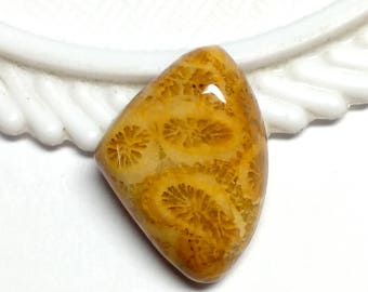 Fossil Coral Fanciy Designer Cabochon,Size 21x15x6 MM,Fossil Coral Loose Gemstone,Smooth Cabochons.Natural Gemston.