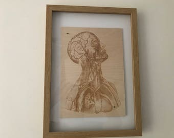 Engraving of medical drawing of the human anatomy on Birch!  Unique engraved wood wall art.