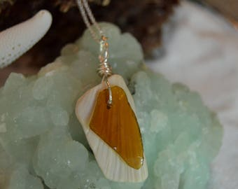 Brown Sea Glass and Clam Shell
