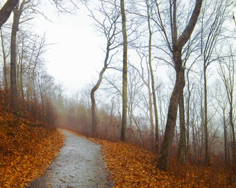 Mountain Trail in December-East Tennessee,Nature and Landscape Photography,Nature,Outdoors,Wall Picture,Home Décor,Prints,Steps,Trail,Autumn