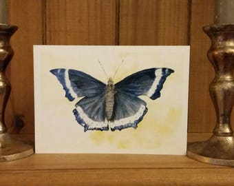 Butterfly. Blue, beautifully detailed, charming.