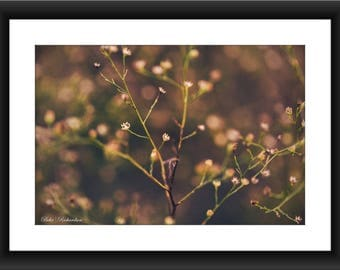 Fine Art Print of Wildflower in Coryell County, Texas, Flower, Photograph