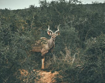 Magical Beast - Photo, Art, Print, Home Decor, Wildlife Photography, Animals, Nature, Travel Photo, Wall Art, South Africa, gift